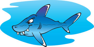 Silver tip shark Royalty Free Stock Images