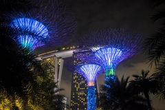 Silver tree garden at night. Supertrees in front of marina bay sands building Stock Photo