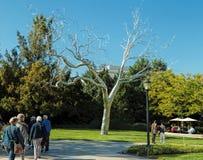 Silver Tree, National Gallery Of Art,Washington, DC Royalty Free Stock Photo