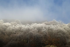 Nature Background: Silver trees on winter mist Stock Photo