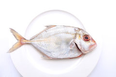 Silver Trevally Stock Photography