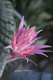 Silver vase bromeliad Royalty Free Stock Images