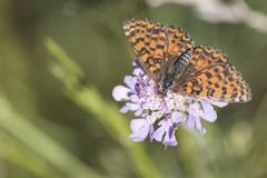 Silver.washed detailed orange butterfly on a purple flower royalty free stock photos