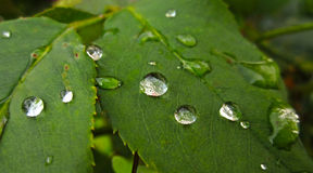 Silver water drops on green Royalty Free Stock Image
