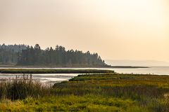 Silver water of hood canal along the edge of wetland shores stock photos