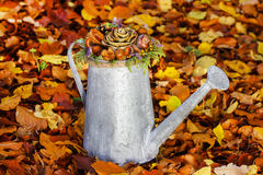 Silver watering can with autumn flowers Stock Photo