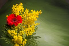 Silver wattle bouquet with red daisy Royalty Free Stock Photos