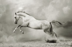 Silver-white stallion Royalty Free Stock Photography