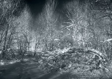 Silver winter Royalty Free Stock Photography