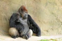 Gorille de Silverback (horizontal) photographie stock libre de droits