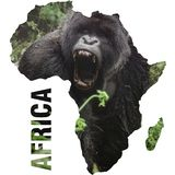 Silverback gorilla with open mouth inside Africa shape continent royalty free stock images