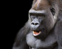 Silverback-Gorillaporträt Stockfoto