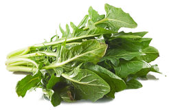 Silverbeet Royalty Free Stock Photography