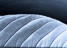 Silverblad Royaltyfri Foto