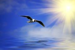 SilverBlue Himmel und flaying Seemöwe Stockfotografie