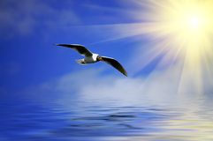 SilverBlue sky and flaying seagull Stock Photography