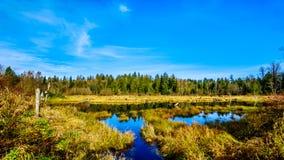 Silverdale小河沼泽地、淡水沼泽和沼泽在使命,不列颠哥伦比亚省,加拿大附近 库存照片