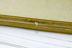 Silverfish is crushed by pages of the book. Pest books and newspapers. Insect feeding on paper - silverfish Royalty Free Stock Image