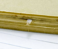 Silverfish is crushed by pages of the book. Pest books and newspapers. Insect feeding on paper - silverfish Royalty Free Stock Photo
