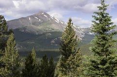 Silverheels in Colorado in zentralem Colorado Stockbilder