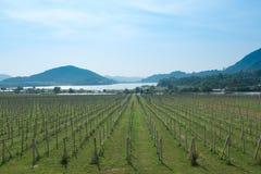 Silverlake vingård Royaltyfri Fotografi