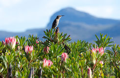 Silvermine Nature Reserve birdlife Stock Photo