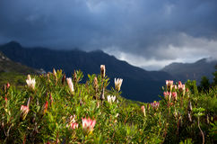 Silvermine Nature Reserve seasons Royalty Free Stock Image