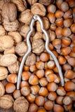 Silvernötknäppare på torkade hasselnötter och valnötter Royaltyfri Fotografi