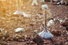 Silversword Haleakala, сильно угрожаемое эндемическое заболевание цветкового растения к острову Мауи, Гаваи Стоковая Фотография