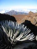 Silversword plant overlooking mountain. Rare and endangered silversword Argyroxiphium sandwicense macrocephalum plant overlooking Haleakala crater on the volcano stock images