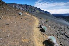 Silversword växt, Haleakala nationalpark Royaltyfri Foto