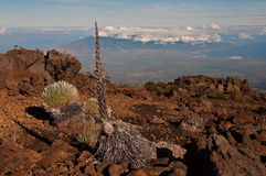 Silverswords on Haleakala over Maui Stock Photo