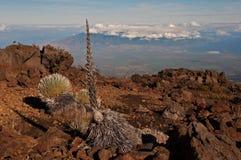 Silverswords on Haleakala over Maui Stock Photo