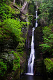 Silverthread Falls in the Fresh Green of Spring Stock Photo