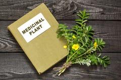 Silverweed (anserine Potentilla) και ιατρικές εγκαταστάσεις καταλόγου Στοκ Εικόνα
