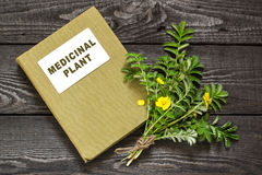 Silverweed (Potentilla anserine) and directory medicinal plant Stock Image