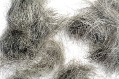 Silvery hair Stock Photos