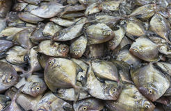 Silvery pomfret. From fish market Royalty Free Stock Photography
