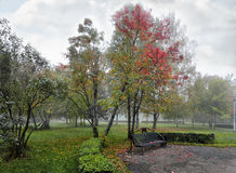 Silvery veil of mist over the autumn Park. Royalty Free Stock Photos