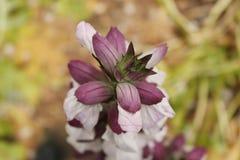 Silvestre de Flor, bajo bosque images libres de droits