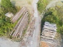 Silvicoltura, Burnhaupt-le-Bas, Haut-Rhin fotografia stock libera da diritti