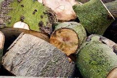 Silvicoltura della registrazione Una collina dei ceppi di legno, blocchi Immagine Stock