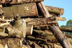 Silvicoltura della registrazione Una collina dei ceppi di legno, sega ha tagliato l'albero 4 Immagini Stock