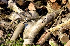 Silvicoltura della registrazione Una collina dei ceppi di legno, sega ha tagliato la betulla dell'albero Immagini Stock
