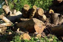 Silvicoltura della registrazione Una collina dei ceppi di legno, sega ha tagliato trees1 Immagine Stock Libera da Diritti