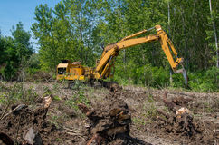 silvicoltura Rimuovendo i ceppi con un escavatore Immagini Stock