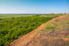 Silviculture around the clay quarry. Near the town of Pology. Zaporozhye region, Ukraine. June 2009 Stock Photography