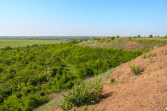 Silviculture around the clay quarry. Near the town of Pology. Zaporozhye region, Ukraine. June 2009 Stock Photos