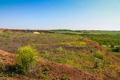 Silviculture around the clay quarry. Near the town of Pology. Zaporozhye region, Ukraine. June 2009 Royalty Free Stock Photography