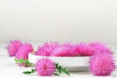 Silybum marianum. Milk thistle herb in a bowl.One of the most common uses of milk thistle is to treat liver problems.Alternative medicine concept on a white royalty free stock image